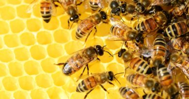 Déclaration des ruchers 2021